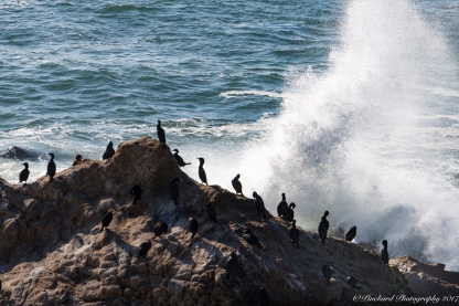 Bodega Point Anhiga