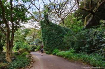 Oahu_Waimea_Falls -9088