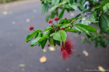 Oahu_Waimea_Falls -9107