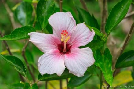 Oahu_Waimea_Falls -9116