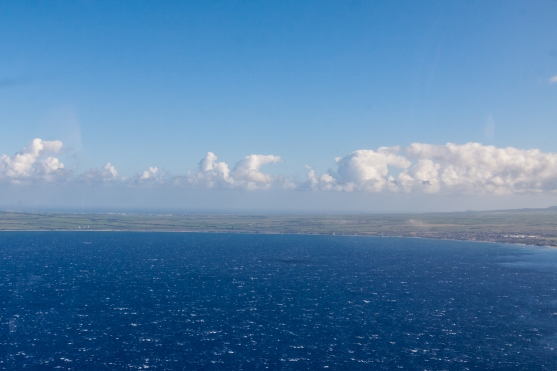 Blue Hawaii-9286
