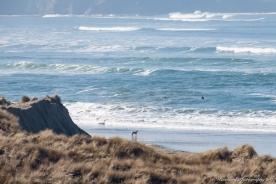 Dillan_beach-8679
