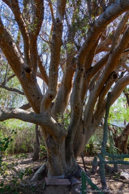 Moorten_Botanical_Garden-0072