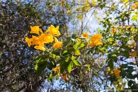 Moorten_Botanical_Garden-0076