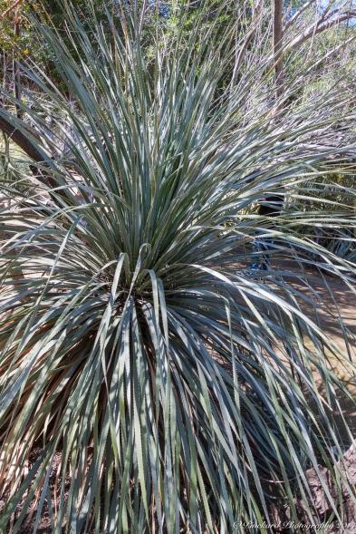 Moorten_Botanical_Garden-0086