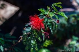 Moorten_Botanical_Garden-0116