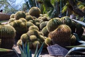 Moorten_Botanical_Garden-0119