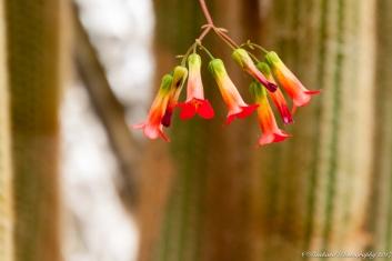Moorten_Botanical_Garden-0131