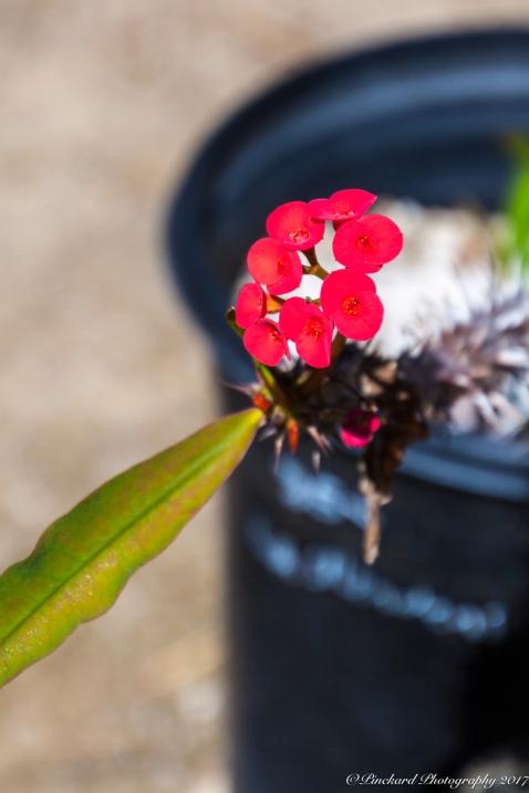 Moorten_Botanical_Garden-0145