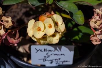 Moorten_Botanical_Garden-0146