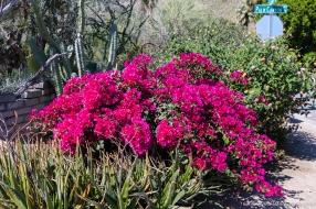 Moorten_Botanical_Garden-0153