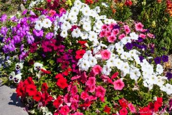 Moorten_Botanical_Garden-0154