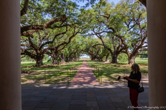 Oak_Alley_Plantation-0703