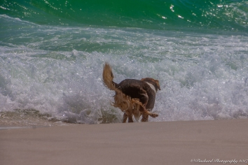 Pensacola_Beach_FL-1720