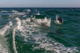 Sea_Screemer-2839