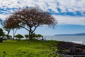 Wailea_Beach_Resort_Maui-9867