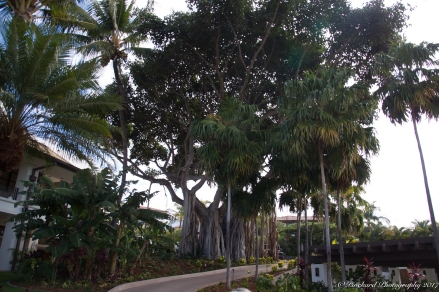 Wailea_Beach_Resort_Maui-9895