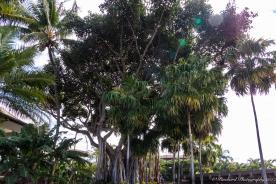 Wailea_Beach_Resort_Maui-9896