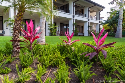 Wailea_Beach_Resort_Maui-9899