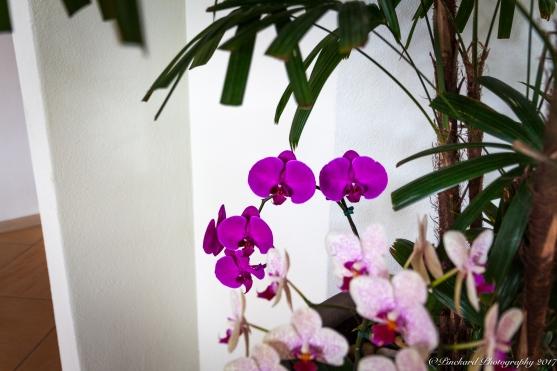 Wailea_Beach_Resort_Maui-9906
