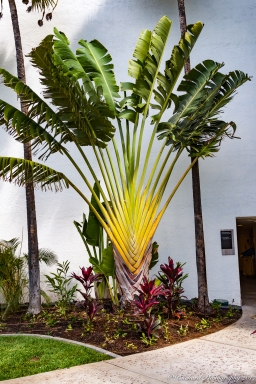 Wailea_Beach_Resort_Maui-9913