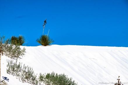 Whitesands_NM-0379