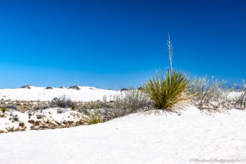 Whitesands_NM-0387